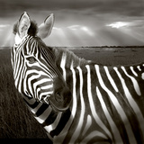 Black &amp; White of Zebra and Plain, Kenya Photographic Print by Joanne Williams