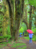 Hall of Mosses, Hoh Rain Forest, Olympic National Park, Washington, USA Photographic Print by Jamie & Judy Wild