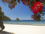 Pohutukawa Tree in Bloom and New Chums Beach, Coromandel Peninsula, North Island, New Zealand Photographic Print by David Wall