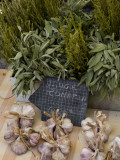 Rosemary and Garlic, Moustiers-Sainte-Marie, Provence, France Photographic Print by Sergio Pitamitz