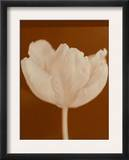 Tulip Serenity Posters
