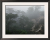 Canyon Mist II Prints by Nicole Katano