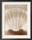Luminescent Irish Deep Seashell Posters