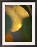 Golden Leaf Prints by Nicole Katano