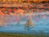 Misty Valley and Forest in Autumn, Davis, West Virginia, USA Photographic Print by Jay O'brien