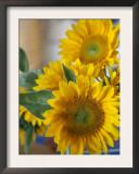 Sunny Sunflower II Posters by Nicole Katano