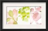 Pink Dogwood Flowers II Print
