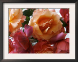 Rose Bouquet Close Up I Prints by Nicole Katano