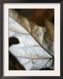 Fallen Leaves I Prints by Nicole Katano