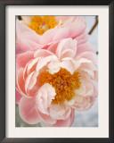 Delicate Blossom III Print by Nicole Katano