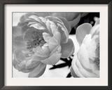 Delicate Blossom Prints by Nicole Katano