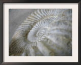 Fossil Shells I Art by Nicole Katano