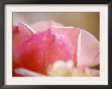 Petal Closeup II Posters by Nicole Katano
