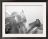 Petal Closeup IV Prints by Nicole Katano