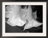 Trumpet Flowers Double Posters by Nicole Katano