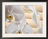 White Orchids III Poster by Nicole Katano