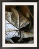 Fall Leaves IV Print by Nicole Katano