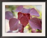 Royal Burgundy Leaves I Print by Nicole Katano