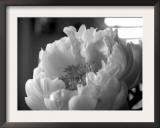 Delicate Blossoms IV Art by Nicole Katano