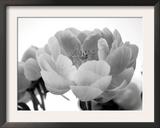 Delicate Blossom I Posters by Nicole Katano