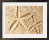 Starfish Imprints Posters