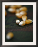 Kernels Close up I Posters by Nicole Katano