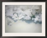 Salt Crystals Prints by Nicole Katano