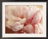 Sweet Flower I Prints by Nicole Katano