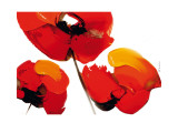 Three Poppies (white) Poster by Tibi Hegyesi
