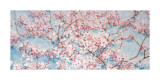 Full Blossom Posters by Nicola Acaster