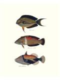 Tropische Fische IV Giclée-Premiumdruck von Georges Cuvier
