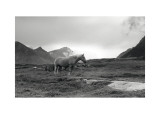 Grazing Together, Lofoten Islands Posters by Andreas Stridsberg