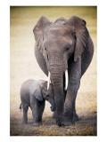 Elephant and Baby Giclee-tryk i høj kvalitet