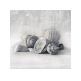 Still Life of Shells I Prints by Ian Winstanley