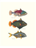 Tropical Fish Premium Giclee Print by Georges Cuvier