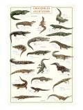 Crocodiles and Alligators Giclee-tryk i høj kvalitet