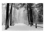 Winter Country Lane, Michigan Giclee-tryk i høj kvalitet