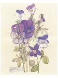 Wild Pansy Giclee-tryk i høj kvalitet af Charles Rennie Mackintosh