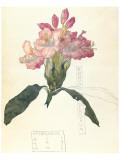 Rhodendron Premium Giclee-trykk av Charles Rennie Mackintosh