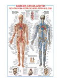 Circulatory System Premium Giclee Print by Libero Patrignani