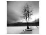 Lake of Woods Tree I Giclee-tryk i høj kvalitet af Shane Settle