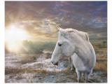 White Reflection Lámina giclée premium por Steve Hunziker
