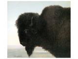 Bison Head Premium Giclee Print by Albert Bierstadt
