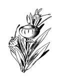 Tureenia Ladlecum Premium Giclee Print by Edward Lear
