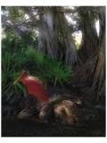 Spoonbill Plight Giclee-tryk i høj kvalitet af Steve Hunziker