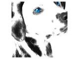 Dalmatian Date IV Giclee-tryk i høj kvalitet