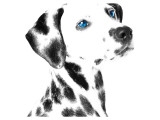 Dalmatian Date V Giclee-tryk i høj kvalitet
