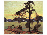 Pino banksiano Lmina gicle de primera calidad por Tom Thomson