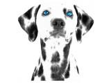 Dalmatian Date VI Giclee-tryk i høj kvalitet