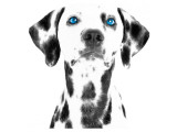 Dalmatian Date VI Impressão giclée premium